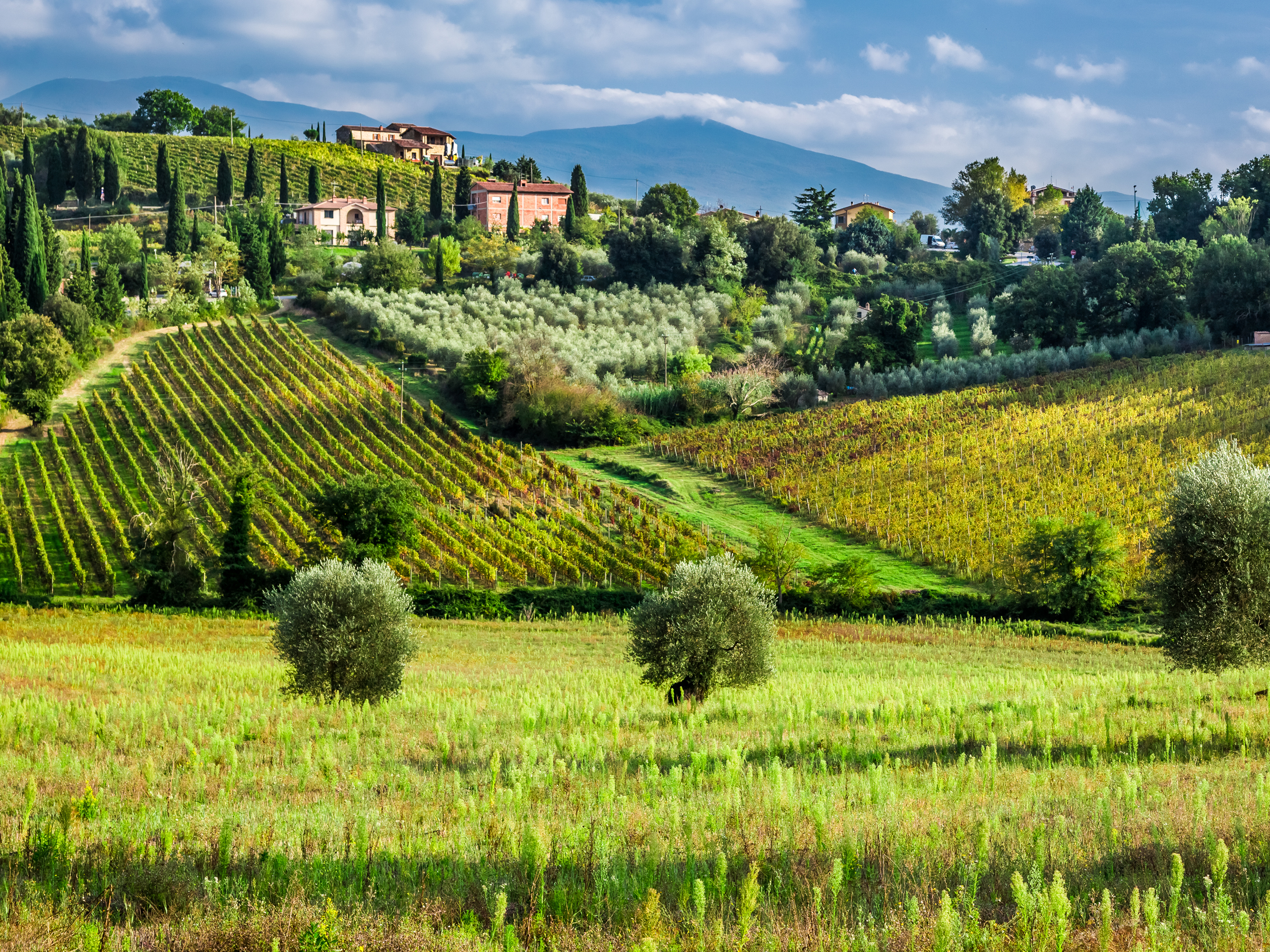 Tuscany</a><br> by <a href='/profile/Bling-King/'>Bling King</a>